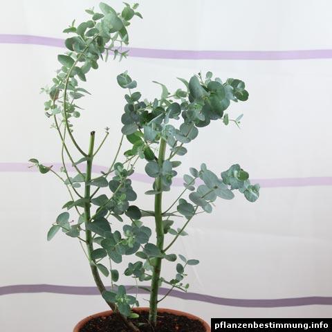 plant identification shrubs and trees. Black Bedroom Furniture Sets. Home Design Ideas