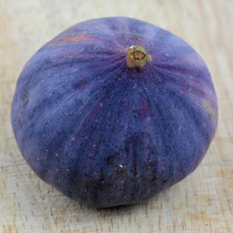blue fig