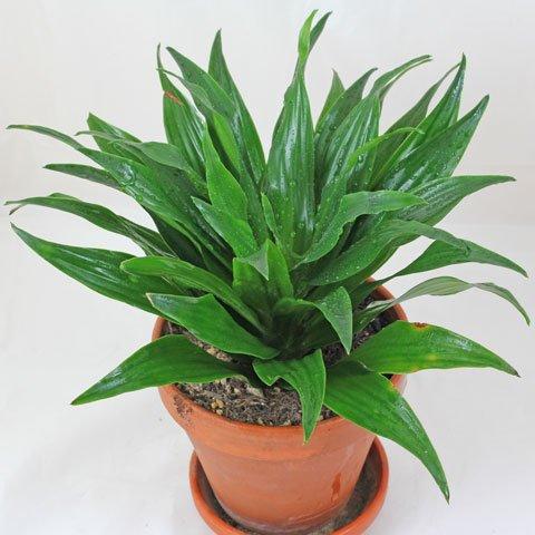 plant identification. Black Bedroom Furniture Sets. Home Design Ideas